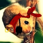 Profile photo of Dormouse