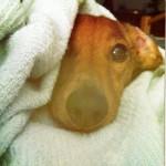 Profile picture of Uncoordinated Porpoise