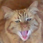Profile picture of the cats meowm